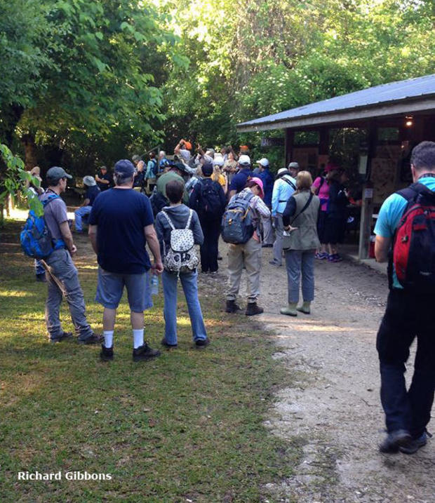 boy-scout-woods-richard-gibbons.jpg