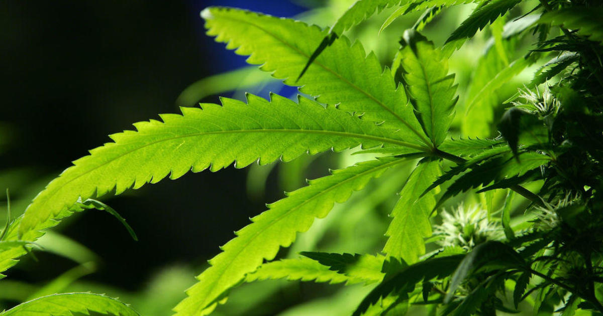 U.N. agency removes cannabis from most dangerous drug category