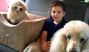 Adopted boy is on a mission to save old dogs who need a home