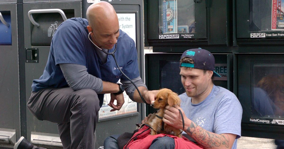 vet visiting dog