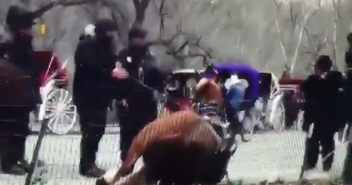 Central Park carriage horse dies after disturbing video thumbnail