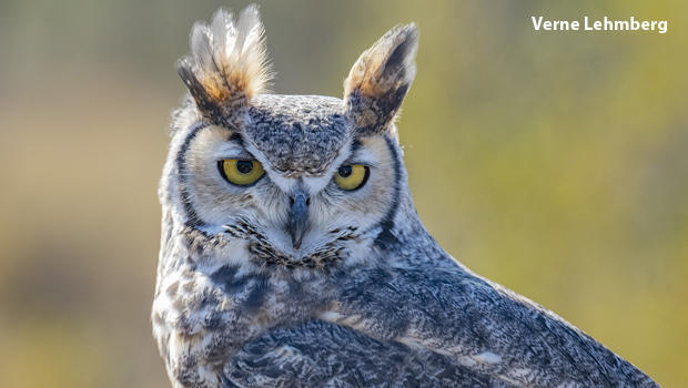 Nature up close: What's needed to keep an owl alive