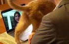 david-pogue-interrupting-cat-promo.jpg