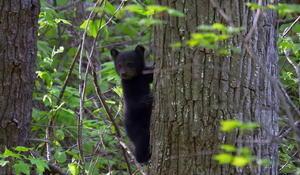 bear-2056703-640x360.jpg