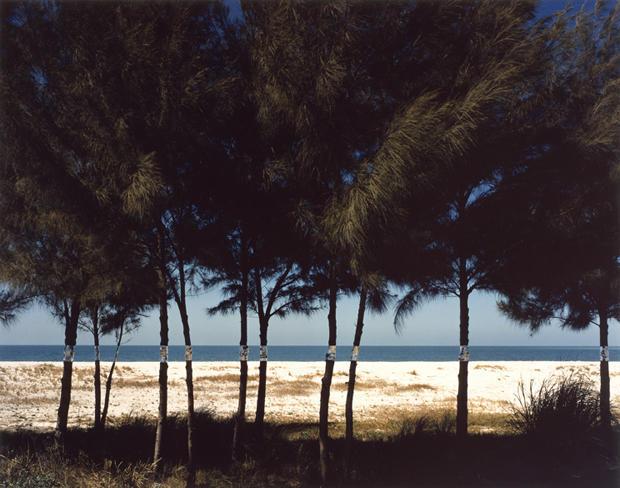 john-pfahl-australian-pines-fort-desoto-florida-august-1977-620.jpg