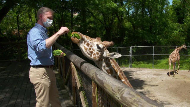 Behind The Shut Gates Of The Zoo Cbs News
