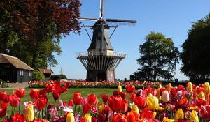 tulipgardenholland1920-482042-640x360.jpg