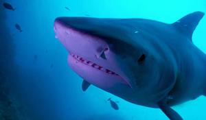 sm-xx-nature-sharks-fiji-051720-for-web0-486014-640x360.jpg