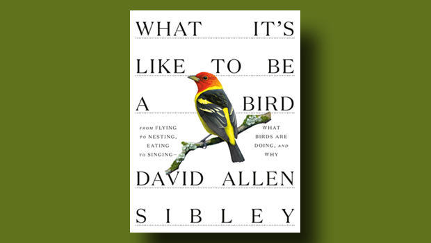 what-its-like-to-be-a-bird-knopf-cover-620.jpg