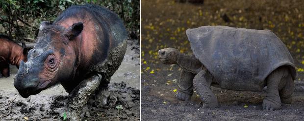 endangered-species-1.jpg