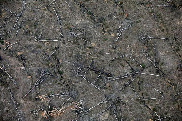 climate change Amazon rainforest