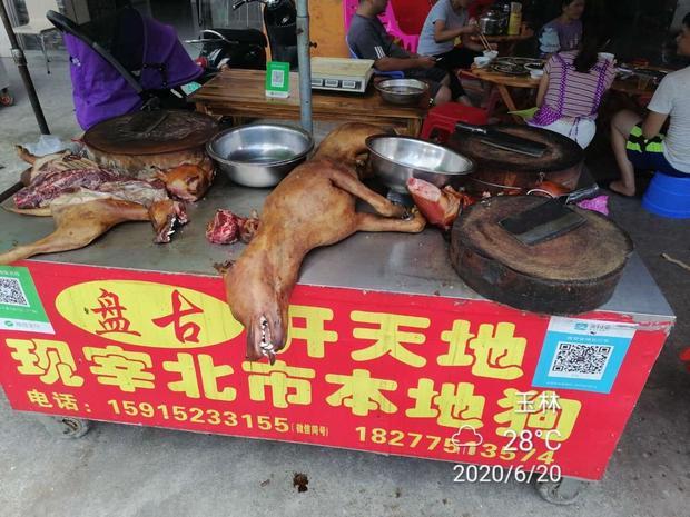 dog-meat-china-yulin.jpg