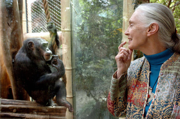 Jane Goodall, the world's foremost autho