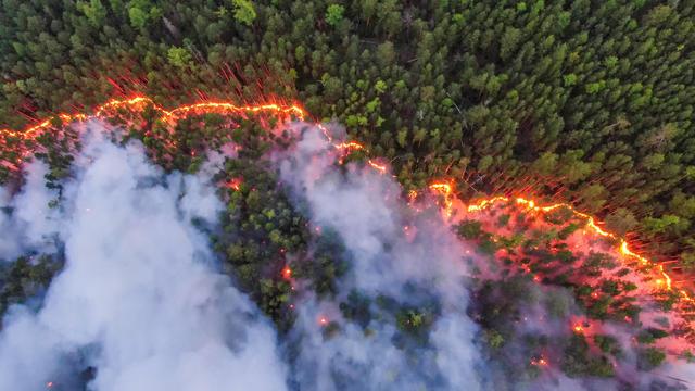 Climate Emergency in Siberia 2020