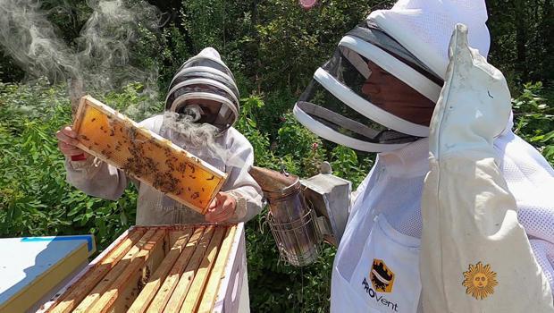ted-mcfall-and-luke-burbank-check-on-bee-hives-620.jpg