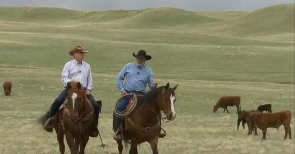 Cattle ranchers and alternative meat makers are competing for a spot on your dinner plate