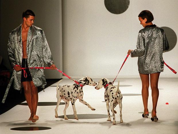 Two dalmations pass each other on the runway durin