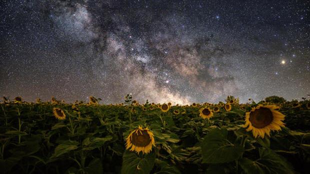 astrophotography-kim-starkey-sunflower-610.jpg