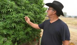 jim-belushi-cannabis-1280.jpg
