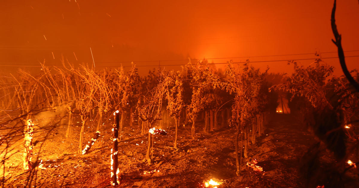 Mass evacuations as wildfire erupts in California wine country