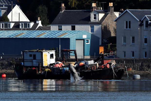 A whale is seen near the Faslane nuclear submarine base in Gare Loch
