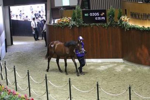 japan-kento-horse-auction.jpg