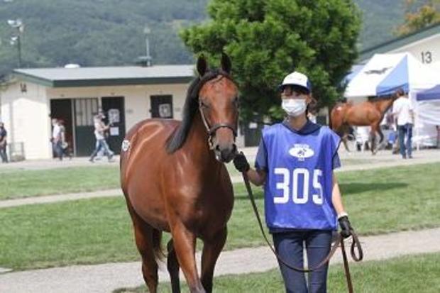 japan-kento-horse.jpg
