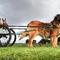 Dogs Victoria Rare Breeds Show