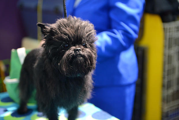 The Westminster Kennel Club Dog Show - 2013