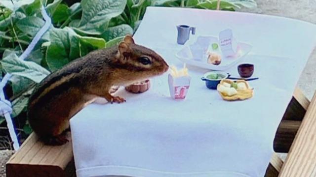 cbsn-fusion-porch-restaurant-caters-to-chipmunk-thumbnail-573354-640x360.jpg
