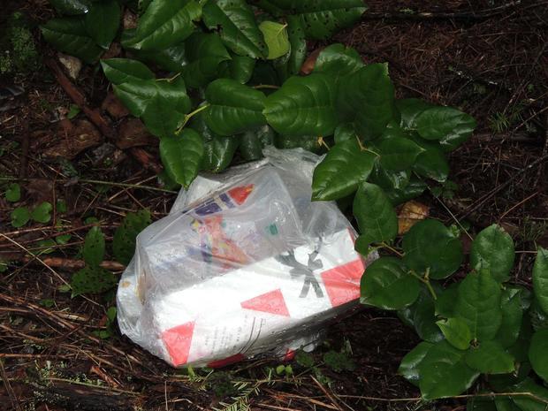 Anna Repkina murder evidence