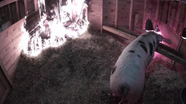 Ethel pig pen fire