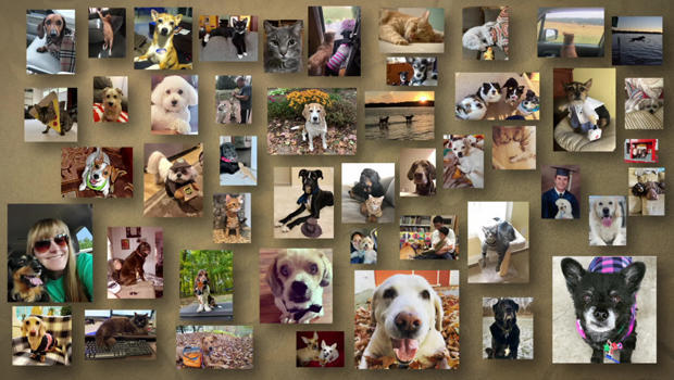 pets-montage-a-620.jpg