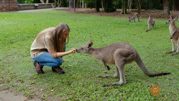 bindi-irwin-with-kangaroo-620.jpg