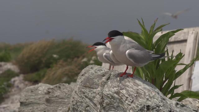 terns1920-597761-640x360.jpg