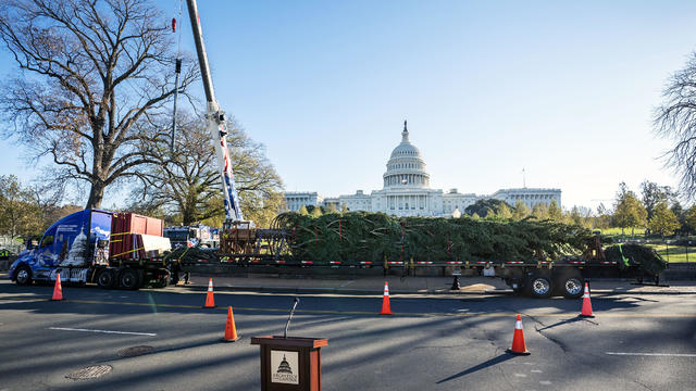 Workers Install US Capitol Christmas Tree