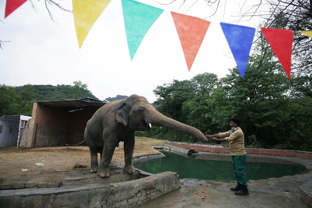 Farewell ceremony for Kaavan, an elephant waiting to be transported to a sanctuary in Cambodia, at the Marghazar Zoo in Islamabad