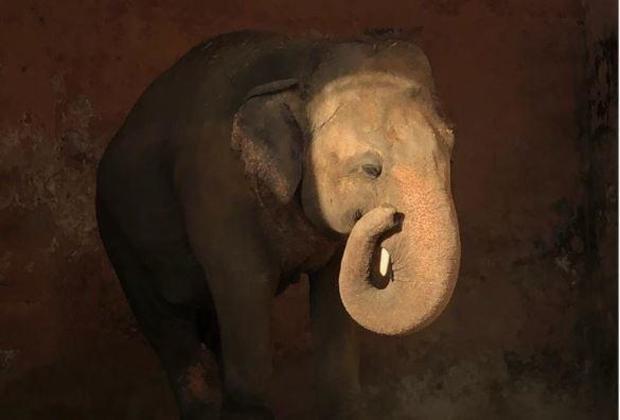 kaavan-elephant-pakistan-zoo.jpg