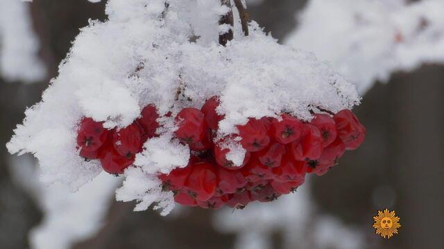 winterminnesota1920-612989-640x360.jpg