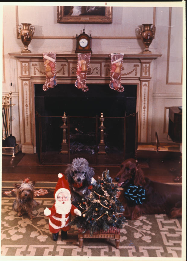 White House Dogs with Christmas Decorations