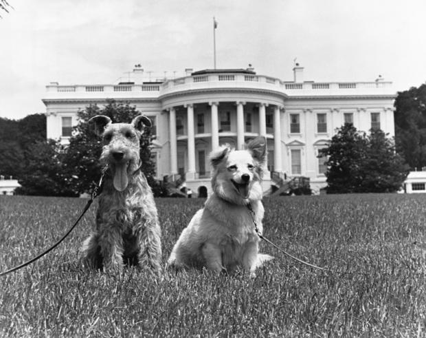Kennedy Family Dogs