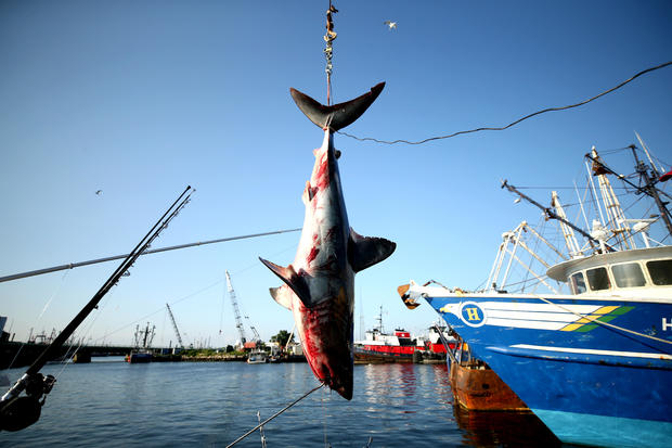 North Atlantic Monster Shark Tournament
