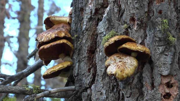 fungus-1-620.jpg