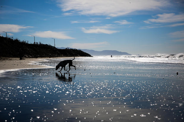 A dog named Lola walks through the water at Ocean Beach in San Francisco, California, on Tuesday, Feb. 14, 2017.