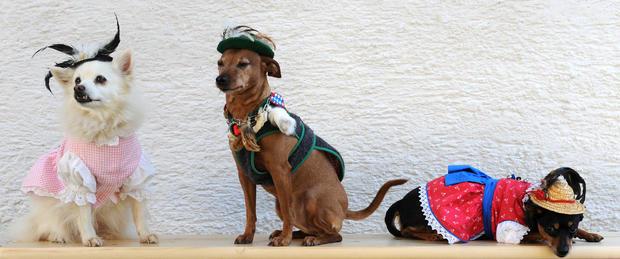 """The pets (L-R) spitz dog """"Spitzerich"""", t"""