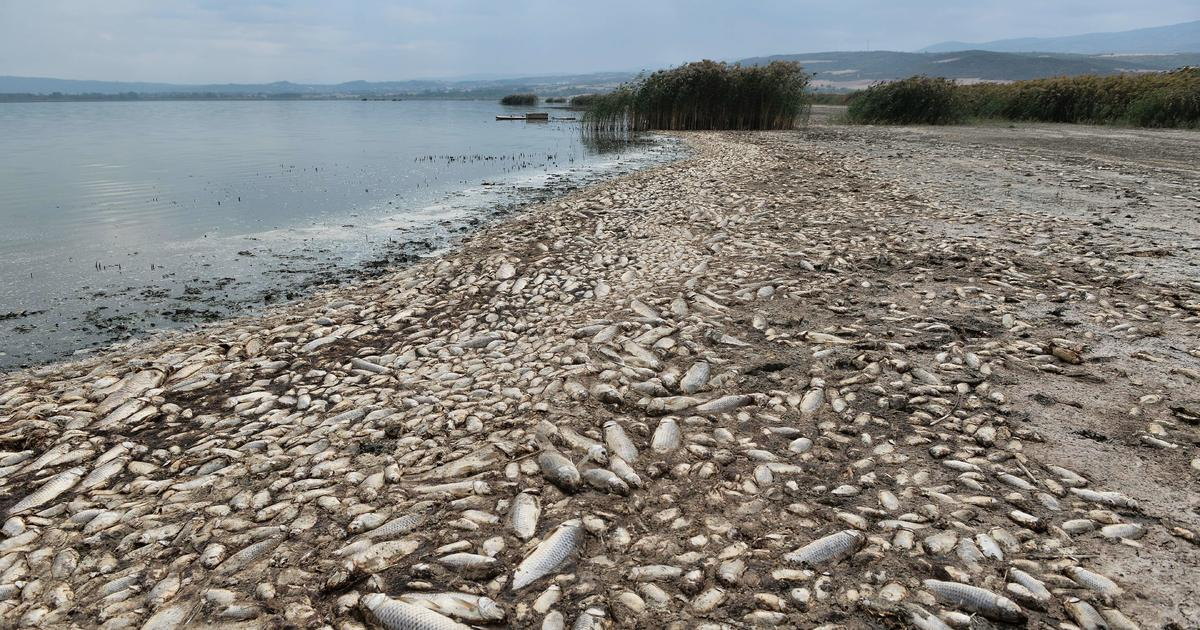 """Freshwater fish are in """"catastrophic"""" decline with one-third facing extinction, report finds"""