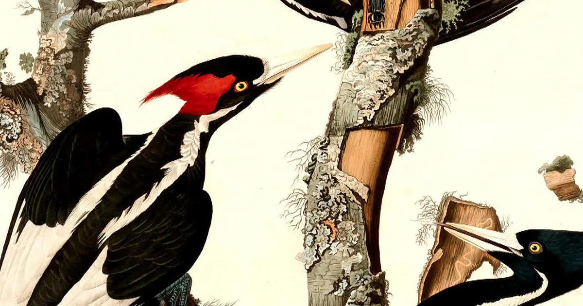 "The return of ""extinct"" species"