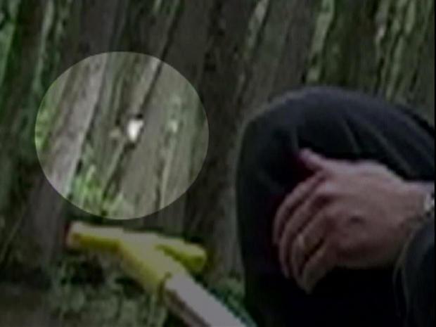 is-it-an-ivory-billed-woodpecker-1280.jpg