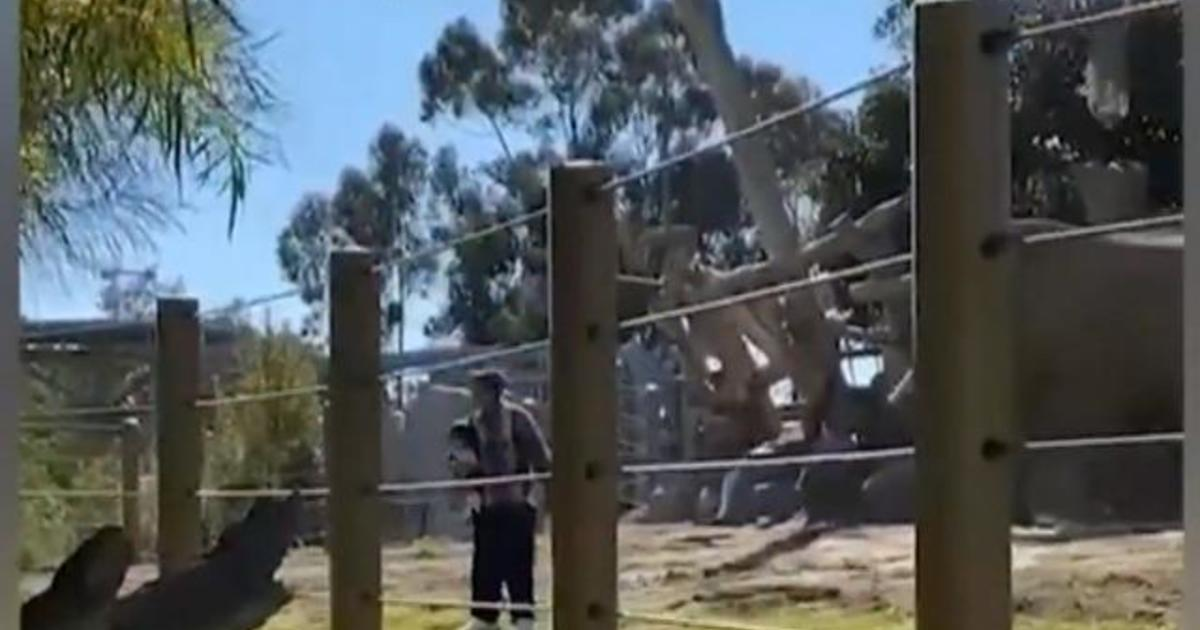 Dad arrested after taking child into elephant enclosure