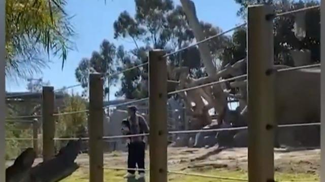 cbsn-fusion-dad-arrested-after-taking-child-into-elephant-enclosure-thumbnail-674633-640x360.jpg